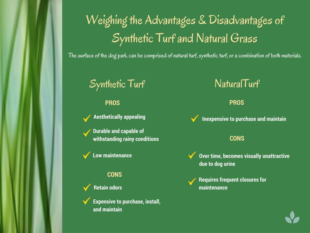 Synthetic vs Natural Turf